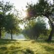 Dawn in the apple garden - Stock Photo