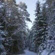 Winter landscape, forest — Stock Photo
