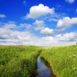 Summer landscape, canal — Stock Photo