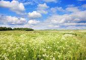 Summer landscape — Stockfoto