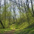 Trail in Spring Park — Stock Photo #1780089