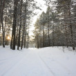 Winter forest — Stock Photo #2157061