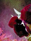 Art. Flower. — Stock Photo