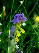 Field flower. — Stock Photo