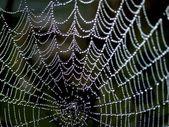 Web. — Stok fotoğraf
