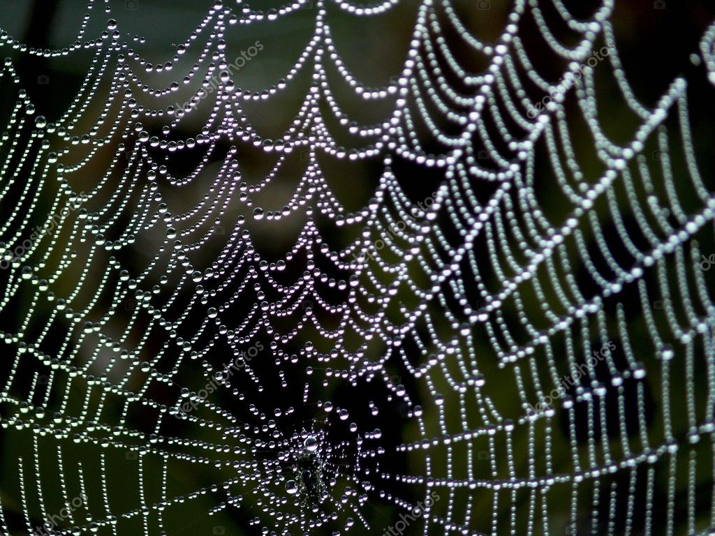 Dew drops on a spiderweb. Summer.  — Stock Photo #1386817
