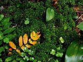 Autumn leaf. — Stock Photo