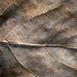 Dead leaf. Grunge. — Stock Photo #1493233
