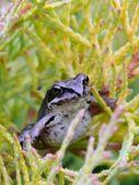 Frog. — Stock Photo