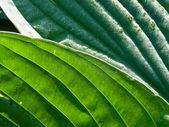 Leaf. Texture. — Stock Photo