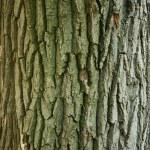 Tree bark — Stock Photo #2000657