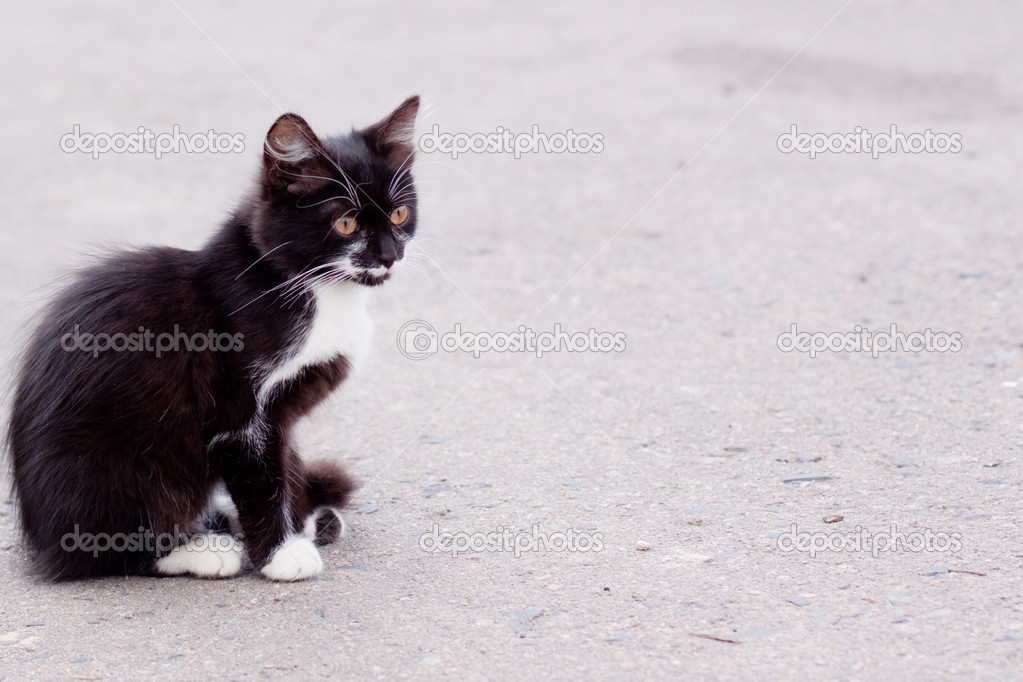 Black and white kitten sitting on road  Stock Photo #1583934