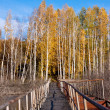 Stock Photo: Golden fall bridge