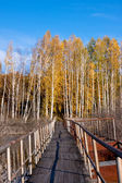 Golden fall bridge — Stock Photo