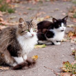Stock Photo: Cats on road
