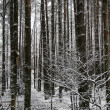 Royalty-Free Stock Photo: WInter forest