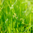 Green grass - shallow depth of field — Stock Photo