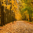 Autumn colors — Stock Photo #1083912