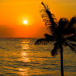 Tropical sunset scene - Stock Photo