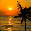 Tropical sunset scene — Stock Photo
