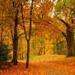 Autumn valley — Stock Photo #1089868