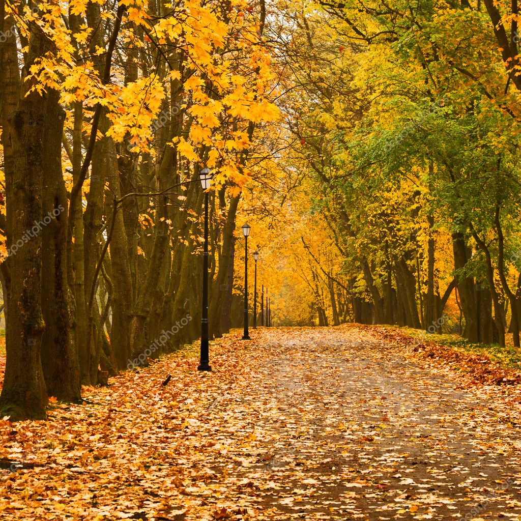 Walkway in autumn park — Stock Photo #1083912