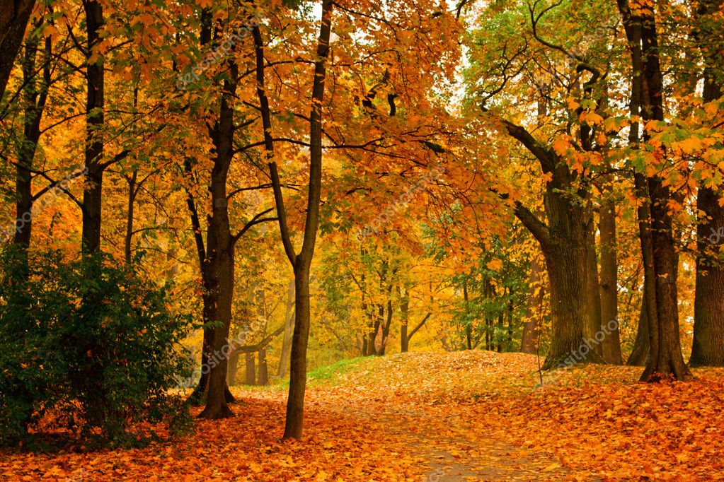 Valley in autumn park — Stock Photo #1089868