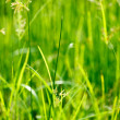 Green grass - shallow depth of field — Stock Photo #1092321