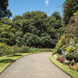Walkway in tropical garden — Stock Photo