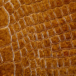 Crocodile skin texture — Stock Photo #1094758