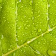 Green leaf with water droplets — Foto Stock