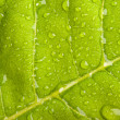 Green leaf with water droplets - Stock Photo