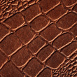 Crocodile skin texture — Stock Photo #1096110