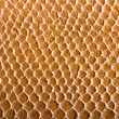 Crocodile skin texture - 
