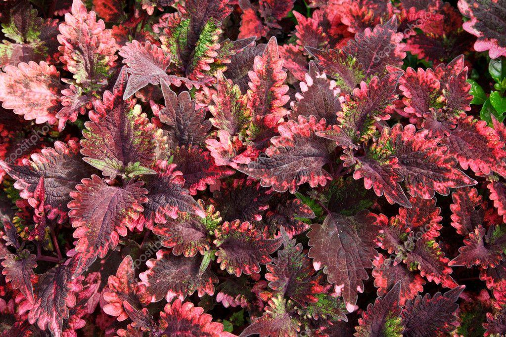 Tropical Plant Leaves Tropical Plant Leaves Close up Photo by Dmitryrukhlenko