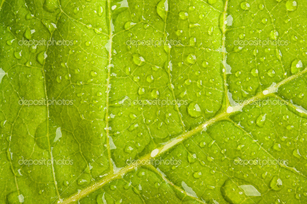 Green leaf with water droplets macro  Stock Photo #1095982