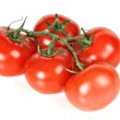 Branch of tomatoes isolated — Stock Photo #1106945