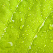 Royalty-Free Stock Photo: Green leaf with water droplets