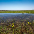 Meadow flooded with spring waters — Foto Stock #2617791