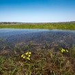 Stock Photo: Meadow flooded with spring waters