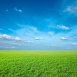 Field of green fresh grass — Stock Photo #2617879