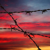 Barbed wire in sunset sky — Stock Photo