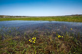 Meadow flooded with spring waters — Stock Photo