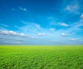 Field of green fresh grass — Stock fotografie