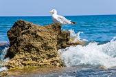 Seagul — Foto de Stock