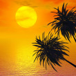 Stock Photo: Sunset Palm