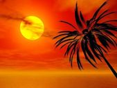 Sunset Palm — Stock Photo
