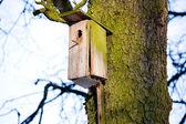 Birdhouse on a tree — Stock Photo
