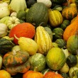 Stock Photo: Various kinds of pumpkins