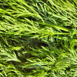 Dill texture with little waterdrops — Stock Photo